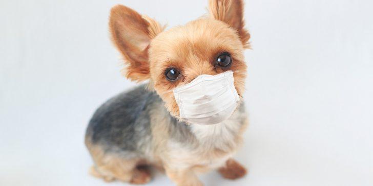 新型コロナウイルスと保険